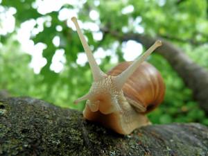 snails-382992_960_720