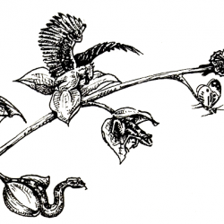 Transformations, dessin de Maëly